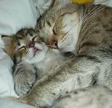 Kucing Imut Emy