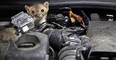 mader tier auto was der marder im motorraum macht motor at