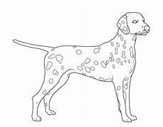 kostenlose malvorlage hunde dalmatiner zum ausmalen