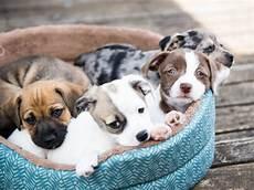 comment vendre un chien vendre des chiots ou un chien