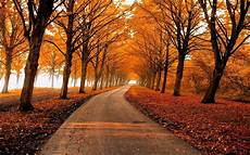 Nature Path 4k Wallpaper by Fall Park Leaves Nature Path Trees Landscape Gold