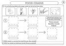 year 4 science animals including humans digestion