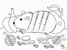 guinea pig coloring page free printable coloring pages
