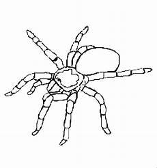 Malvorlagen Insekten In Insekten 00231 Gratis Malvorlage In Insekten Tiere Ausmalen