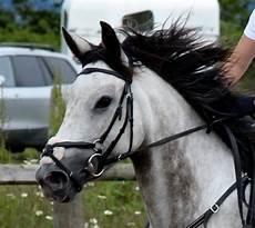 poney a vendre ffe