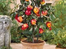 arbre fruitier intérieur comment planter les arbres fruitiers d 233 coration