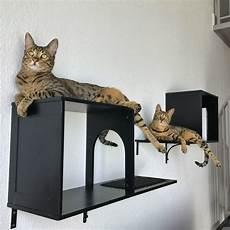 Cat Bookshelves