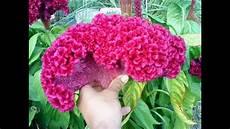 Les Plus Belles Fleurs Du Monde Momo