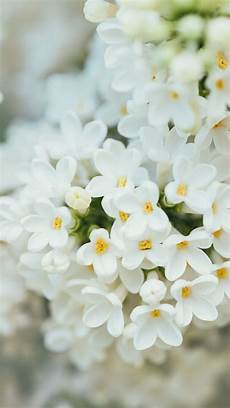 White Flowers Hd Images by Wallpaper White Flower 4k 7k Nature 18555