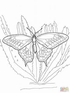 black swallowtail coloring page free printable coloring
