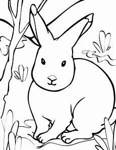 arctic animals printable coloring pages 17219 animal coloring pages print this page arctic animals coloring pages coloring pages