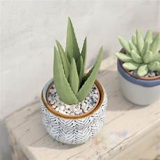 Aloe Vera Potted Cactus Plant 3d Model Obj Fbx Ma Mb