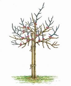 Stachelbeere Pflanzen Pflege Und Tipps Mein Sch 246 Ner