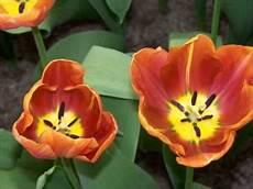 frasi i fiori ditelo con i fiori