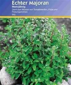 thymian wiki thymian pflanzen pflege schneiden ernten