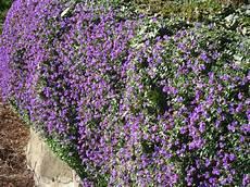 fiori a cascata cascata di fiori