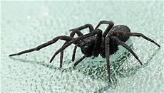 Was Hilft Gegen Spinnen Wissen 24 Org