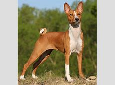 Hypoallergenic Dog Breeds   Dogs that don't shed   K9