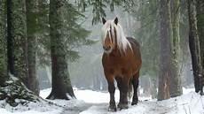 Ausmalbilder Pferde Im Winter Pferde Bilder Schon Winter