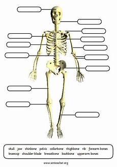 printable skeleton labels worksheet with various options