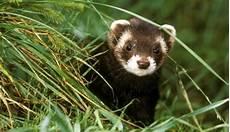 wow haustiere ausgefallene tiere die ihnen gro 223 e freude - Kleine Haustiere Liste