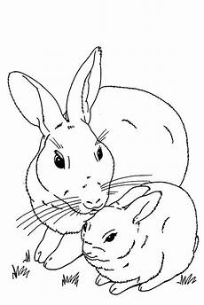 baby bunnies coloring pages and print for free