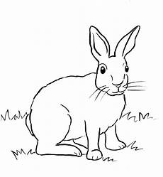 cottontail rabbit coloring page starts for