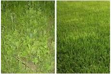 Rasenpflege Nach Dem Winter - winterrasen richtig pflegen durch vertikutieren d 252 ngen