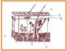 Biologi Gonzaga Soal Ekskresi 1