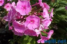 pflanzen und wellensittiche buchstabe f