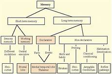 memory and homoeopathy homeopathy world community psychology homeopathy homeopathy