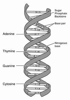 dna basics culturing science biology as relevant to us