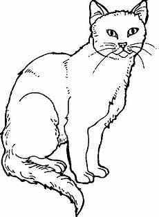 Ausmalbilder Katze Schwer A Special