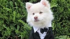 Gambar Anjing Lucu Dan Imut Yang Bisa Bikin Gemas