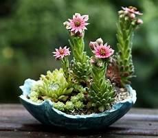 piante grasse in vaso fiori di piante grasse in vaso piante grasse in vaso