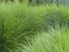 Und Gräser - machen sie mehr aus ihrem innenhof teil 5 gr 228 ser und