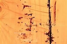 cimici da letto uova fotografie di cimici dei letti 10 immagini speciali