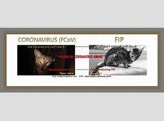 What Does Coronavirus Do-What Do We Know About Coronavirus