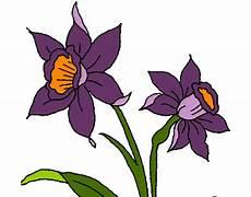 dibujos de la orquidea el araguaney y el turpial para colorear dibujo de orquideas hermosas pintado por chaz en dibujos net el d 237 a 14 10 12 a las 04 14 23