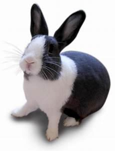 Gambar Lucu Binatang Peliharaan Terlengkap Display