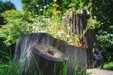 Baumstumpf Im Garten Verschönern - baumstumpf entfernen ohne ausgraben 187 geht das