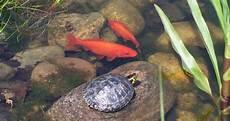 goldfisch haltung im teich fische f 252 r den teich archive teich freunde dein