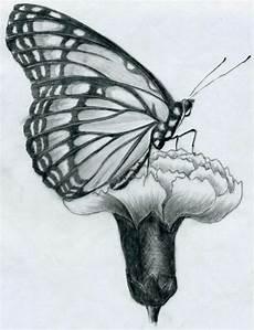 disegni di fiori a matita disegni a matita facili farfalla profilo posata garofano