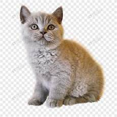 Kucing Png 10 Free Cliparts Images On