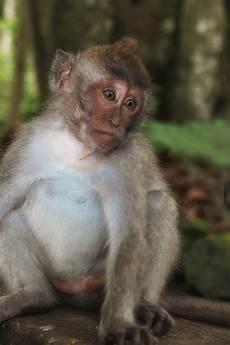 34 Heboh Gambar Lucu Monyet Marah Gerbanglucu