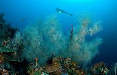 Lombok Villas Caribe Nautica | b1a gili lombok gili trawangan villa almarik gangga