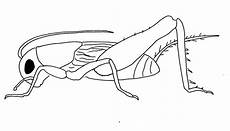 Insekten Ausmalbild Kostenlos Insekten Malvorlagen Malvorlagen