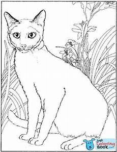 Ausmalbilder Siamkatze Siamese Cat Animals Coloring Pages Pertaining To