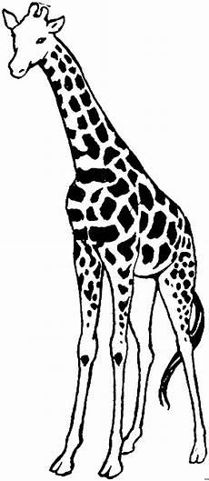 Malvorlagen Giraffe Pdf Beste 20 Giraffe Malvorlagen Beste Wohnkultur