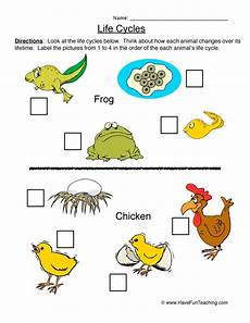 animal cycle worksheets 13938 cycle worksheets teaching